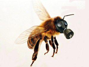 Agronegócio em Belterra gera aumento na mortandade de abelhas