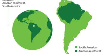 Amazônia Internacional