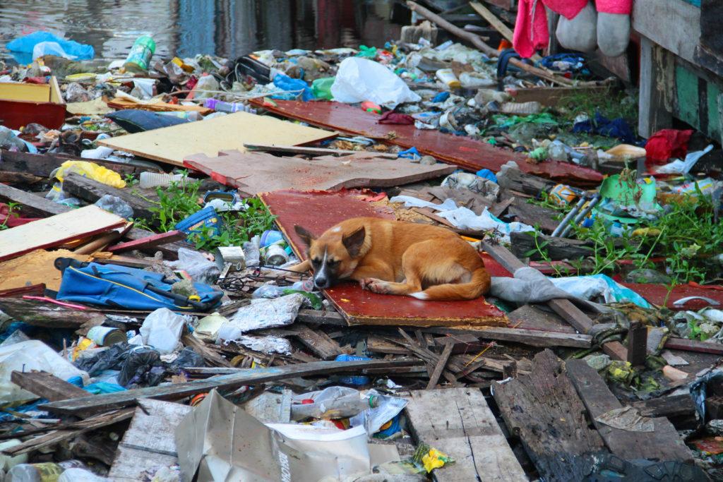 Cão dorme sobre o lixo em igarapé inundado de entulho em Manaus.