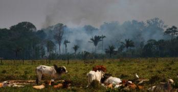 """As queimadas em Lábrea, """"Terra de Ninguém"""""""