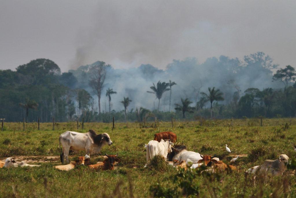 """Amazônia:  para entender o """"Dia do Fogo"""" – parte 2"""
