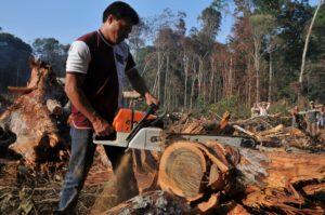 Amazônia: uma catástrofe se aproxima