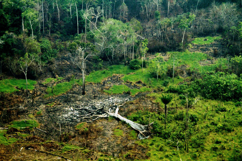 Amazônia Latitude: Onde se planta jornalismo floresce democracia