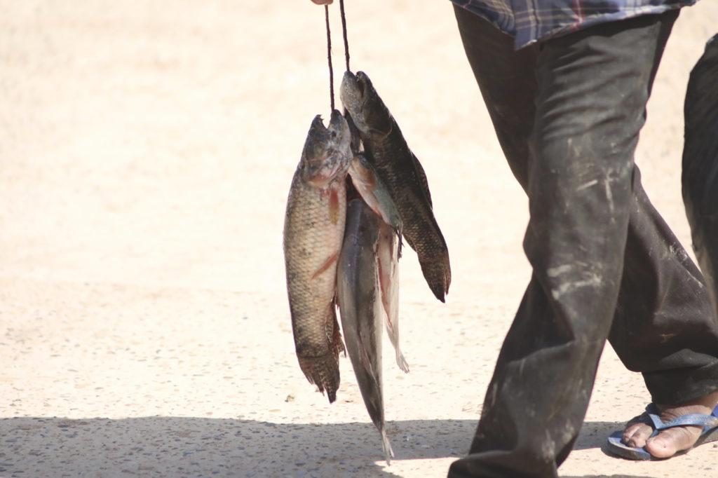 pescador lago do maicá santarém