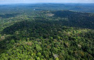 Relatos de uma expedição científica na Amazônia do século XIX