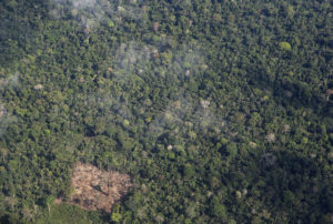 Comitê ambiental critica projeto de lei que reduz RESEX Chico Mendes