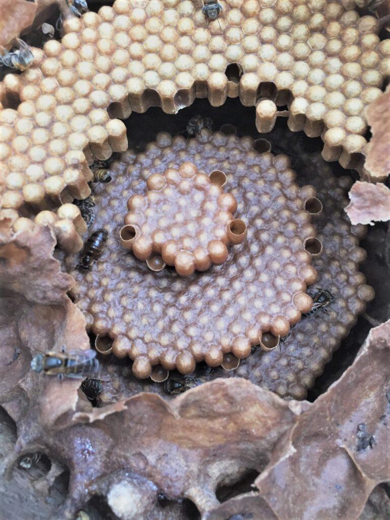 mel morte polinizadores resex tapajos agrotoxico