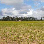 soja comunidades agricultores belterra