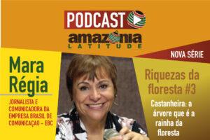 Riquezas da Floresta #3: Castanheira