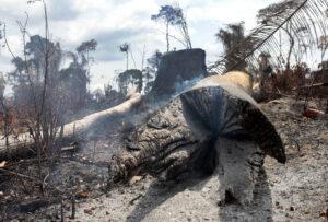 Grilagem como causa do desmatamento na Amazônia