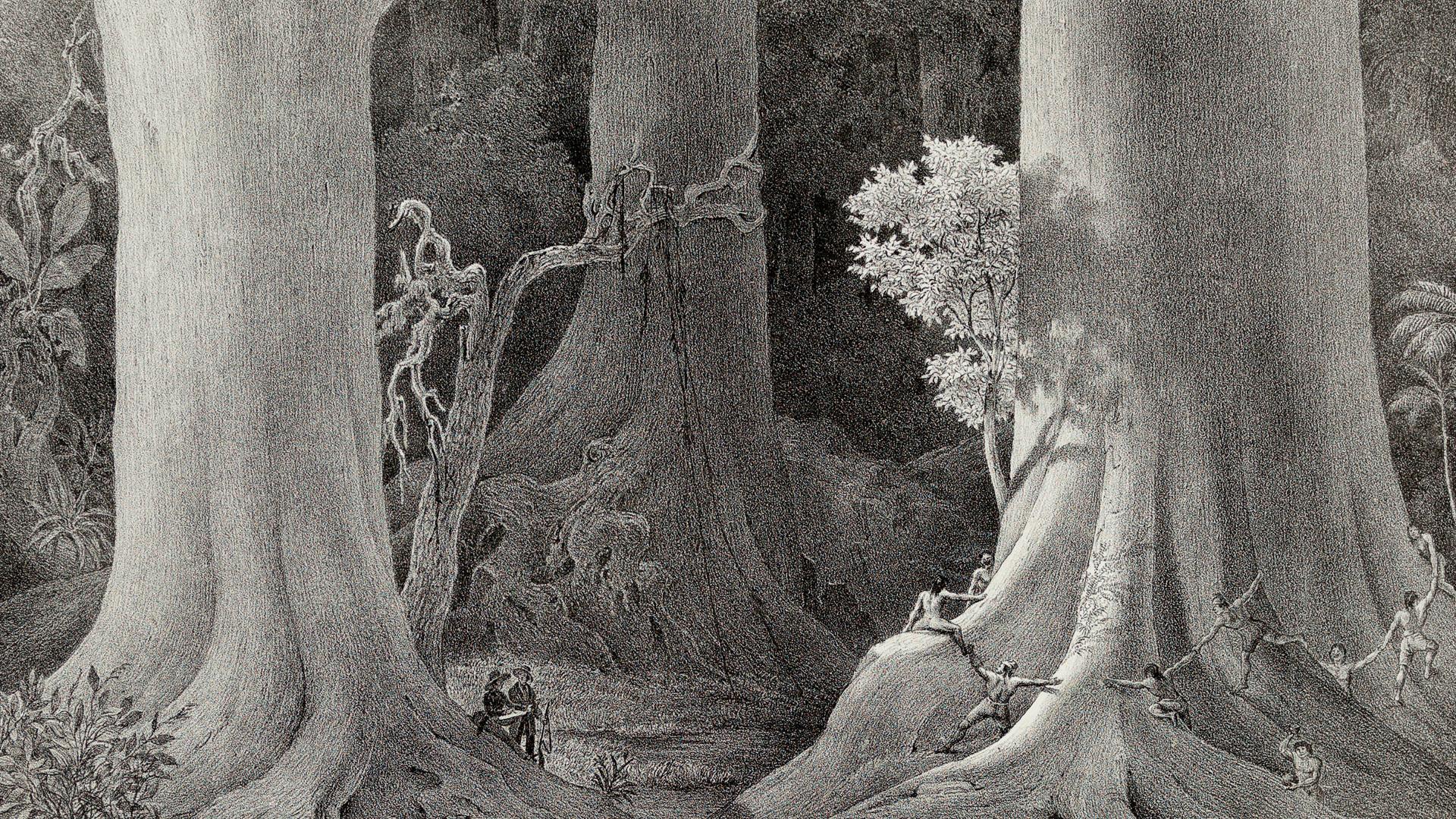 exploração floresta socioambiental