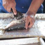 Peixe passando por limpeza em cima de uma mesa de alumínio