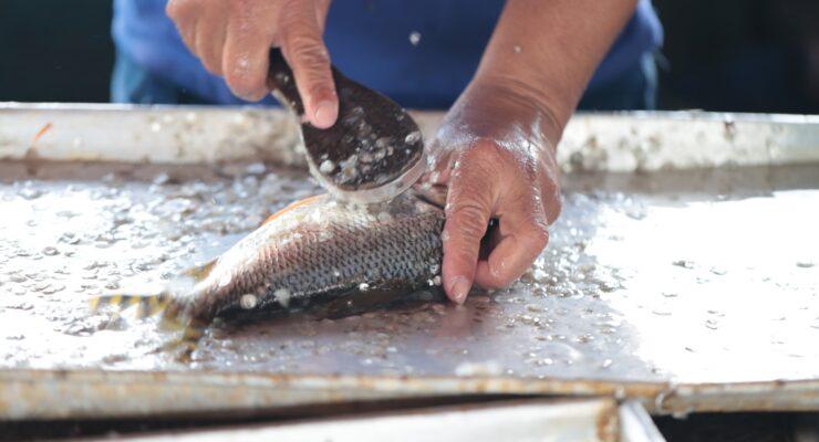 Estudo da UFAM mapeia dificuldades enfrentadas por pescadores artesanais em Novo Airão