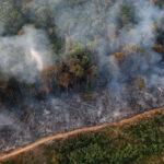 Uma linha diagonal queimada divida a área devastada pelo fogo e uma área verde