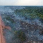 uma estrada de terra ao lado de uma floresta fumegante