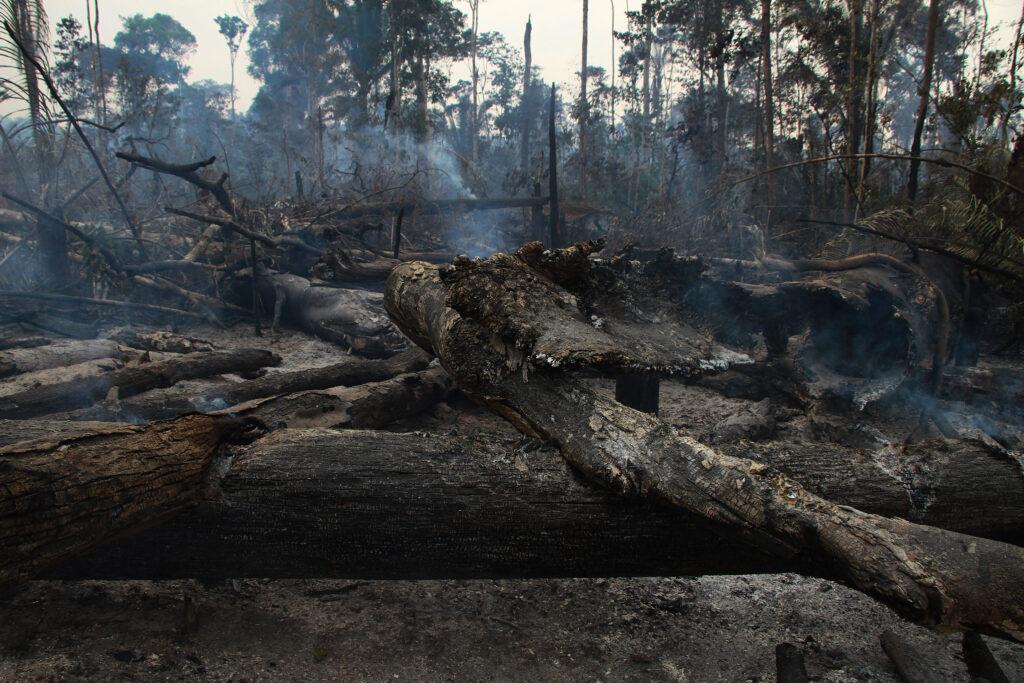áreas de floresta carbonizadas saindo fumaça