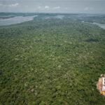 Foto aérea da floreta nas margens do Xingu
